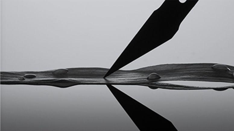 Le soin noir: an extraordinary survival capacity